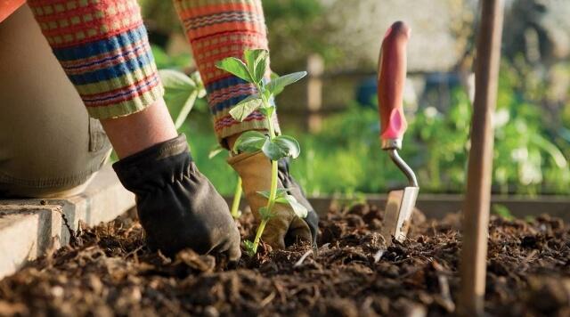Удобрение почвы, посадка саженцев